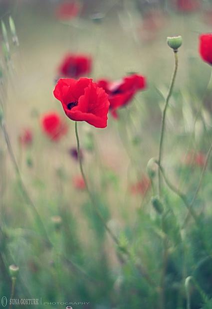 Mi ne pevamo zato što smo srećni, srećni smo zato što pevamo.
