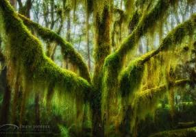 blagoslov drvetu