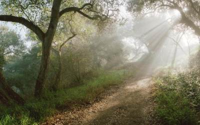 Svetlost u šumi