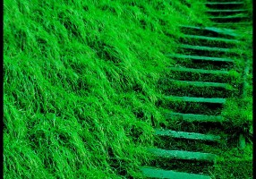 Green_Way_by_NoNicknameNeeded