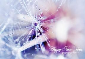 kakva želite da vam bude nova godina?