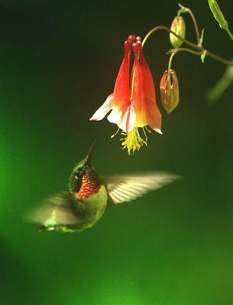 Ljubav je sloboda od svake uslovljenosti!
