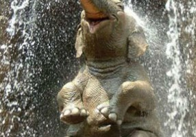 slon-simbol