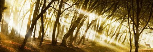 sunblast_ii_by_borda-d5m8gva