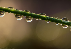 holding_on_to_the_raindrops_by_isotophoto-d5npsrz